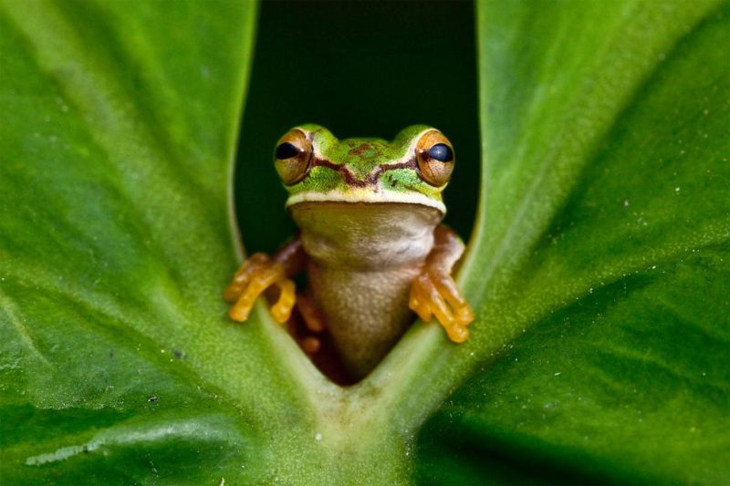Grodorbook-talk-search-lost-frog-01_84214_990x742
