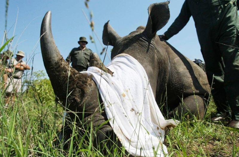 rhino-poaching-2014-south-africa_88037_990x742