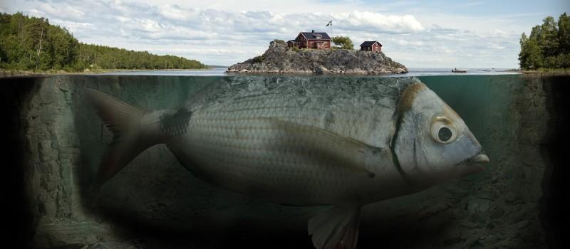 fishy-island-1200x525