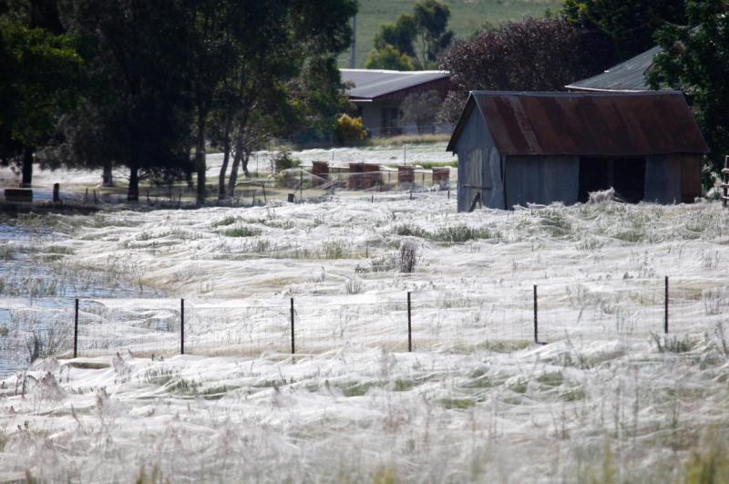 spiderweb2012.adapt.1190.1