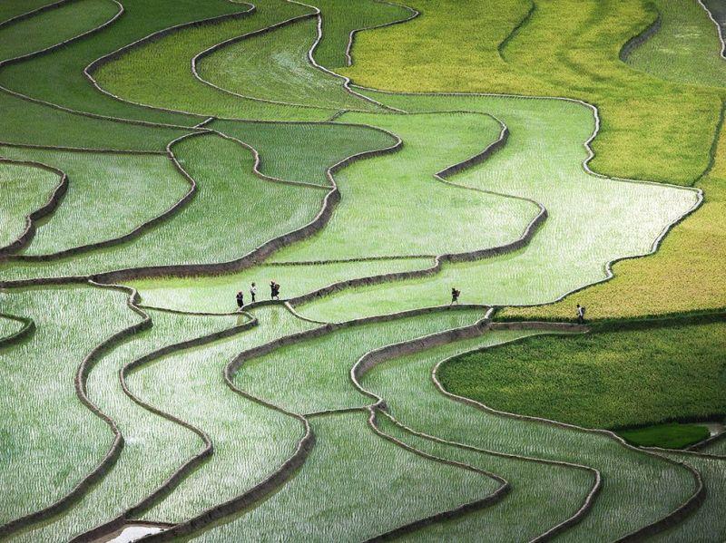 Risterraced-rice-paddies-hmong-ngpc2015_92125_990x742