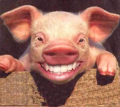 smil-gris (1)