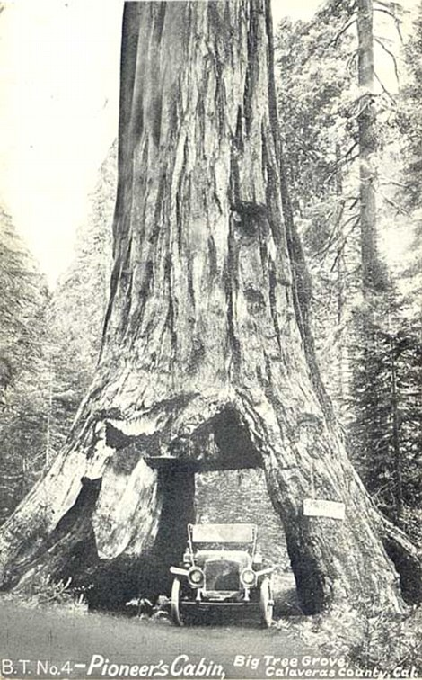 3bfd207400000578-4101752-the_tree_still_has_carvings_in_it_from_the_1800s_when_visitors_w-m-52_1483971874721