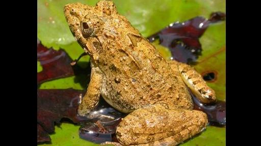 billfrog-3