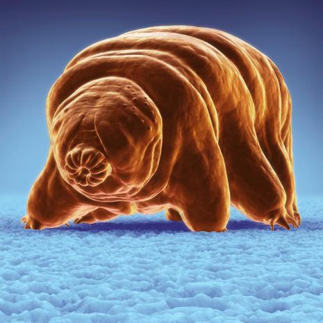 Trögkrypare tardigrade.adapt.885.1